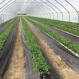 Sistemi Di Canalina A Terra Per Frutta