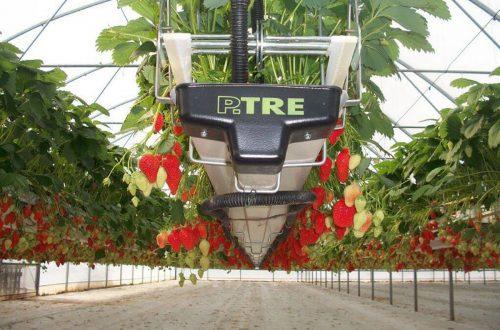 Frutta Appesa APPESA 0013