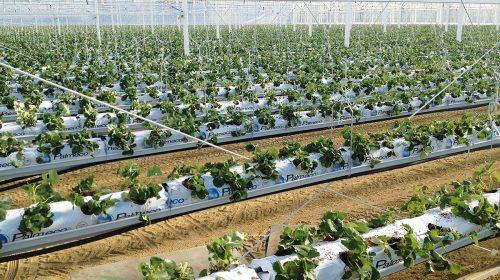 Sistemdi Di Canalina Appeso Per Frutta