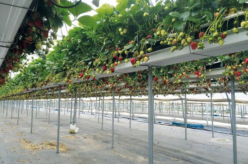 Sistemdi Di Canalina Sospeso Per Frutta