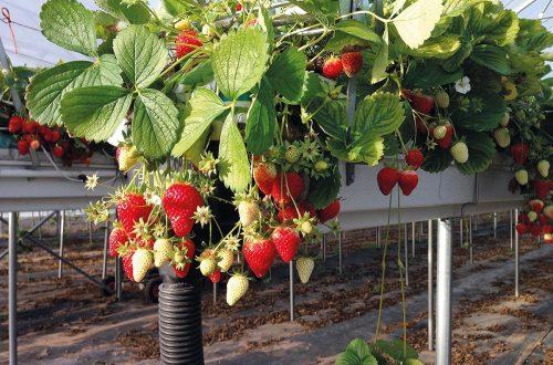 Frutta Sospesa IMG 4015