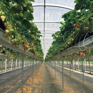 Frutta Sospesa IMG 7255