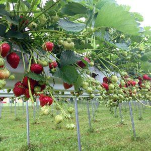 Frutta Sospesa IMG 8405