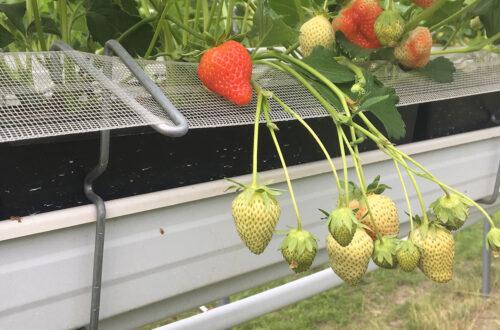 Frutta Sospesa IMG 8611