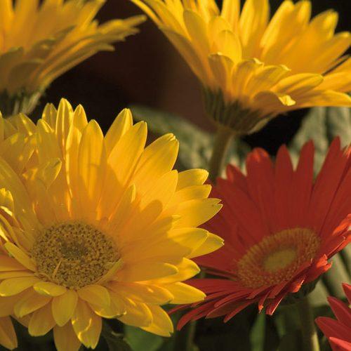 ideale-per_fiori-1