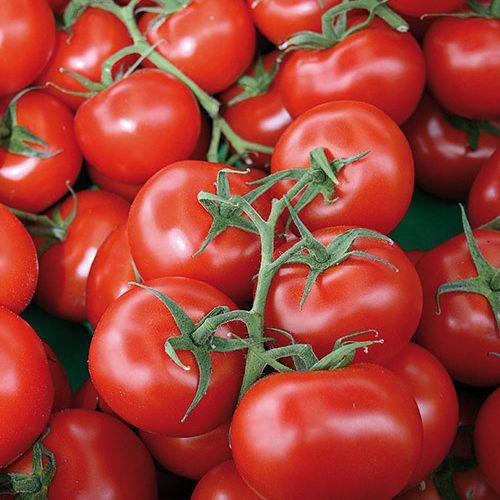 ideale-per_pomodori