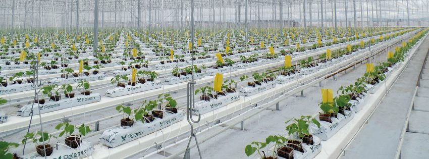 Sistemi di Canalina per Vegetali
