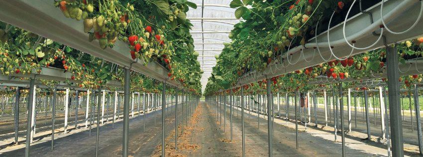 Sistemi di Canalina per Frutta
