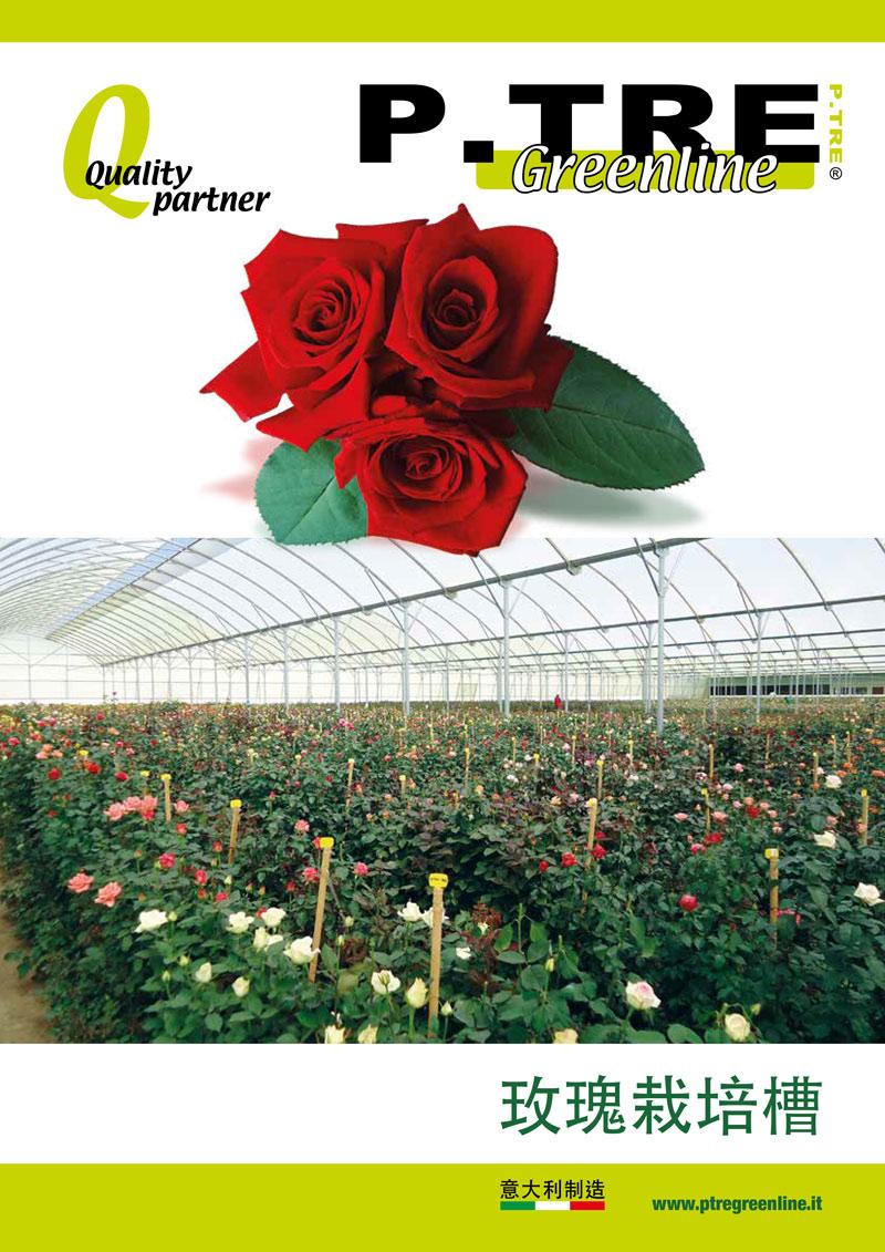 schede A4 cina rose 1 - Homepage